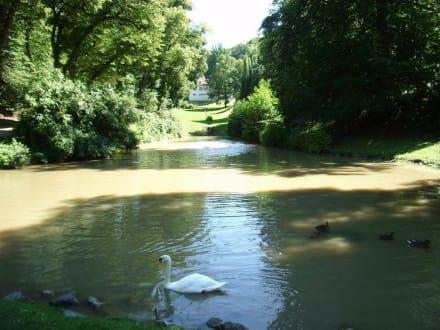 Schwanensee im Fürstenpark - Fürstenlager