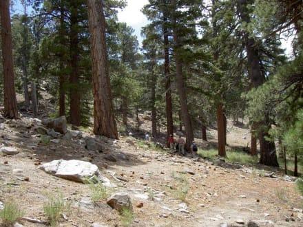 Aussicht vom Mount Jacinto - San Jacinto Mountains