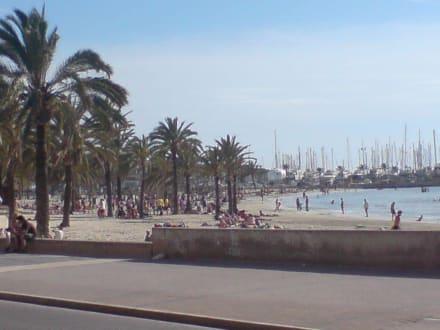 Blick zum Hafen - Strand El Arenal/S'Arenal