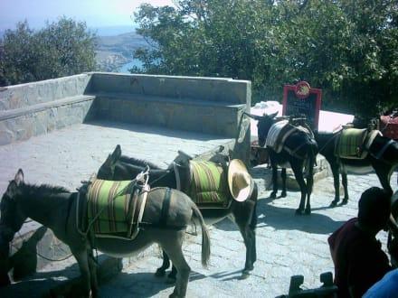 Mit dem Esel auf die Akropolis von Lindos - Eselreiten Lindos