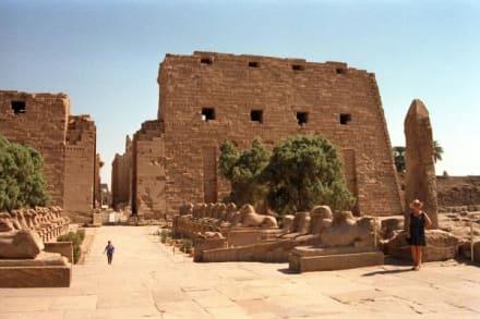 Widderallee - Amonstempel Karnak