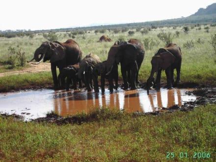 Elefanten-Großfamilie im Tsavo-Ost - Tsavo Ost und West Safari