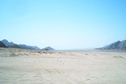 Sinaiwüste - Sinaiwüste