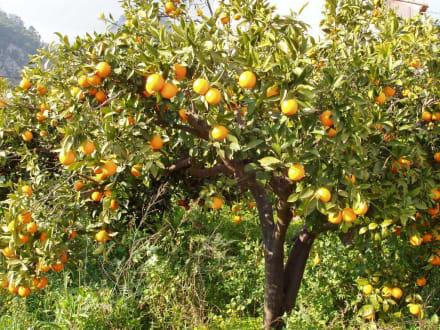 Tal der Orangen - Tal der Orangen