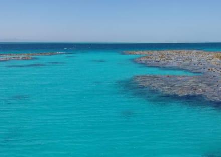 Korallenriff - Delfinausflug mit Mo