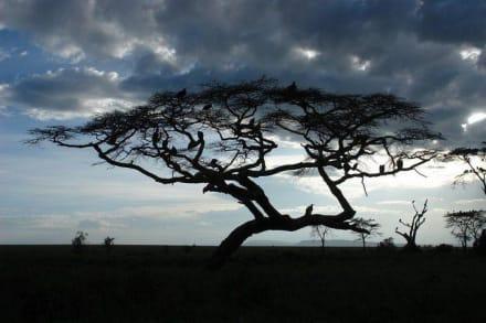 Sonstiges Landschaftmotiv - Ngorongoro Reservat