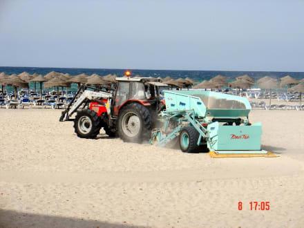 Strandreinigungsmaschine in Son Baulo - Strand Son Bauló