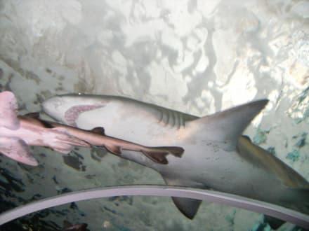 Sonstige Tiere - Sydney Aquarium