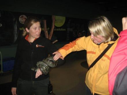 Schlange streicheln - Wildlife World