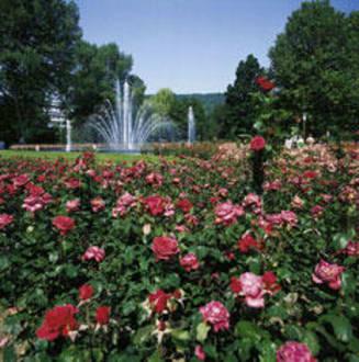 Garden -