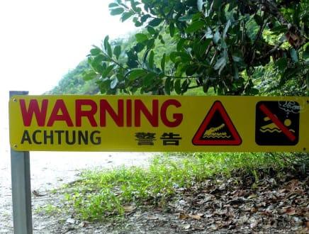 Warnung vor den Panzerechsen - Cape Tribulation