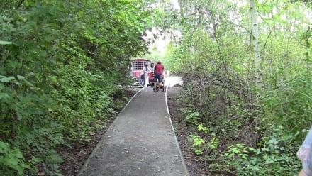 Asphaltierte Schienenstränge - Natur-Park Südgelände