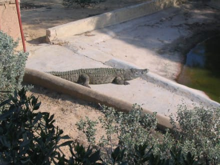 Krokodil - Friguia Park
