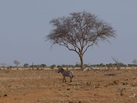 Safari - Tsavo Ost Nationalpark