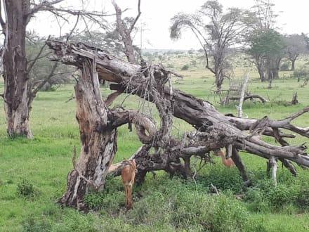 Traumhafte Landschaft - Tsavo Ost und West Safari