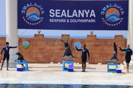 Show/Cabaret/Varieté - Sealanya Delfinpark
