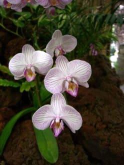 Orchideen - Palmitos Park