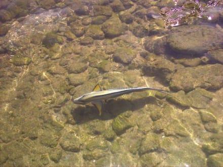 Fischwelt - Schnorcheln Sharm el Sheikh