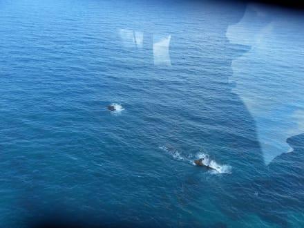 Wrack im Meer - Helikopter-Rundflug Punta Cana