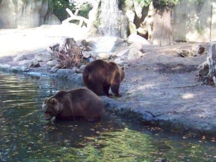 Tierpark Hagenbeck - Tierpark Hagenbeck