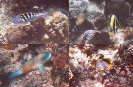 Unterwasseraufnahmen - Insel Nusa Lembongan