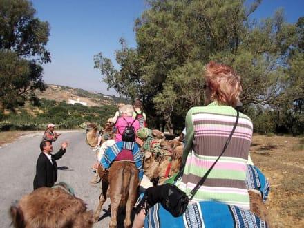 Auf Tour! - Kamelreiten Nabeul