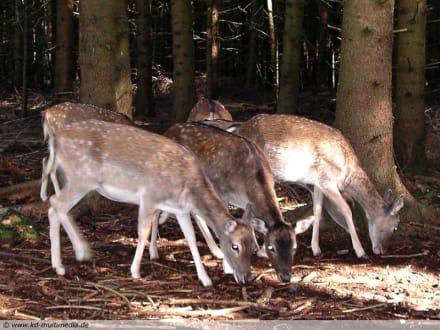 Berg Tierpark in Blindham (Aying) - Bergtierpark Blindham