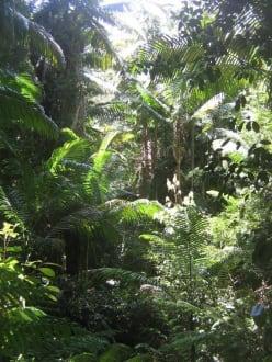 Regenwald in der Mitte von Fraser Island - Fraser Island