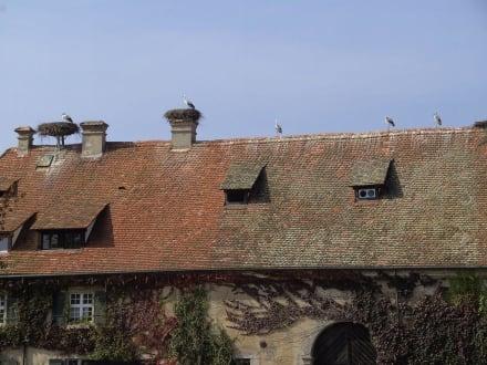 Affenberg in Salem - Affenberg