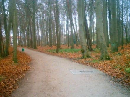 Wald - Karls Erdbeerhof