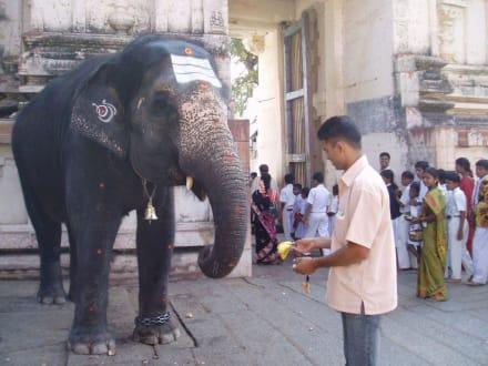 Laksmi, der Tempel-Elefant - Tempelanlage Hampi