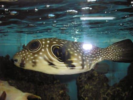 Wie am Riff - Aquarium
