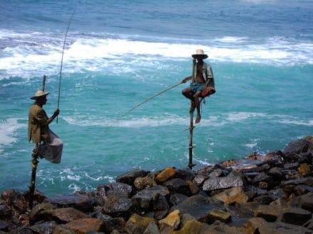 Stelzenfischer - Stelzenfischer