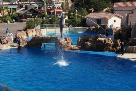 Delphinshow - Sea World