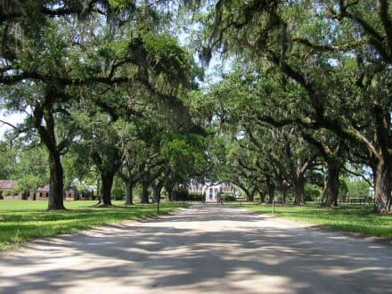 Boone Hall Plantation - South Carolina - Boone Hall Plantation