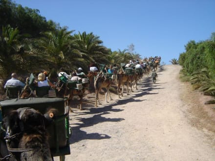 Kamelsafari im Oasis Park - Oasis Park