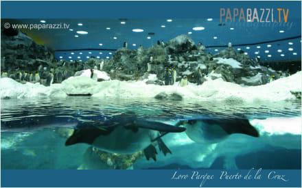 *Loro Parque Puerto de la Cruz* - Loro Parque