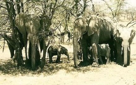Elefantenfamilie - Masai Mara Safari