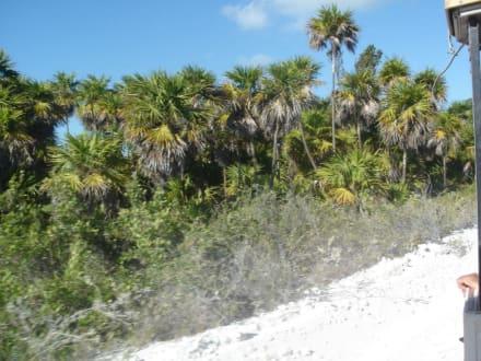 Straße zu den Stränden Paraiso und Sirena - Cayo Largo