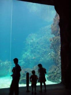 Ocean - Burgers' Zoo
