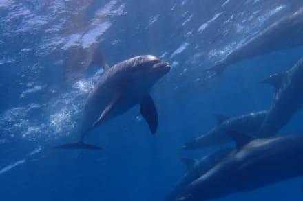 Delfine - Ausflug mit Mohamed