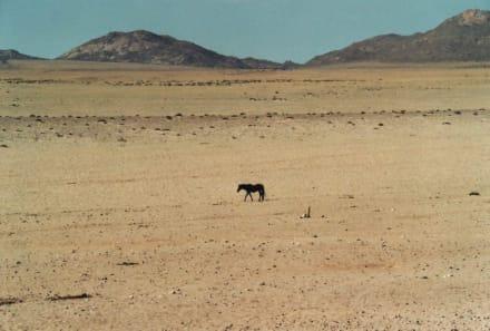 Einsames Wildpferd in der Namib Wüste - Wüste Namib