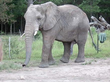 Typisch Mann! - Knynsa Elephant Park