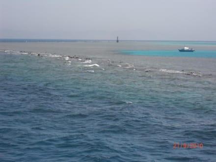 """Riff """"Dolphin-House"""" - Ausflug mit Mohamed"""
