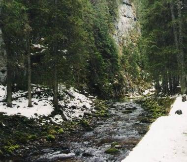 Naturreservat/Zoo - Tal Dolina Kościeliska