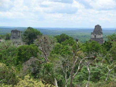 Aussicht von einer Pyramide - Tikal - Das Erbe der Maya