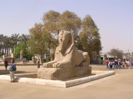 Sphinx in Memphis - Freilichtmuseum Memphis