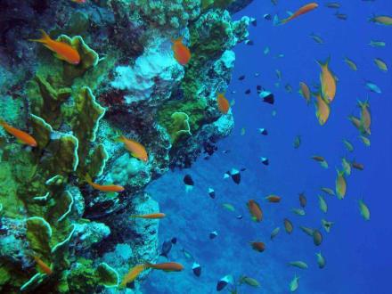 Wie im Aquarium - Tauchen Nabq Bay