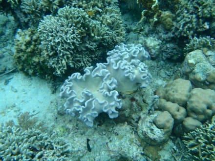 Unterwasserwelt - Unterwasserwelt