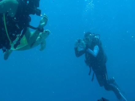 Tauchbasis Aquarius Divers Makadi Bay In Makadi Bay Holidaycheck